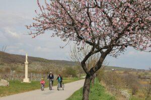 Kirschblütenweg