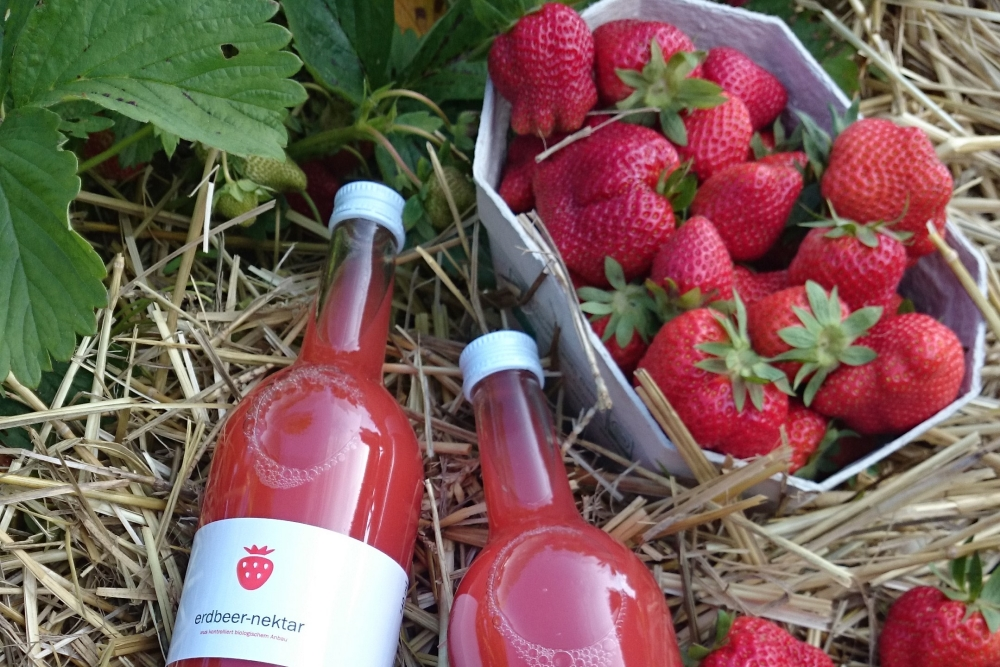 Bio-Erdbeeren vom Bioweingut Heideboden