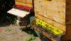 Bienen am Biohof Katona