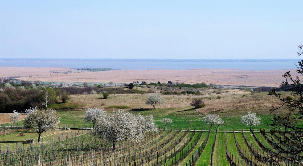 Kirschblütenregion