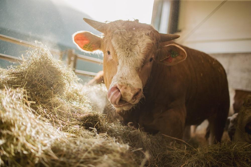 Tierhaltung im Bullinarium