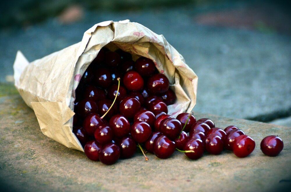 Leithaberger Edelkirsche Früchte