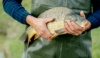 Karpfen von der Fisch & Edelkrebszucht Jungwirth (c)Martina Siebenhandl